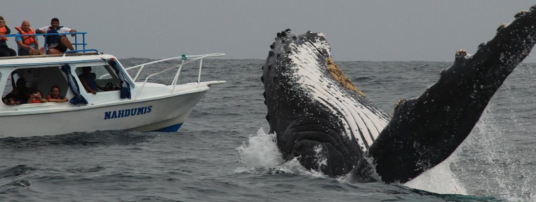 whales-olon tours